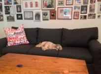 doggy-on-sofa